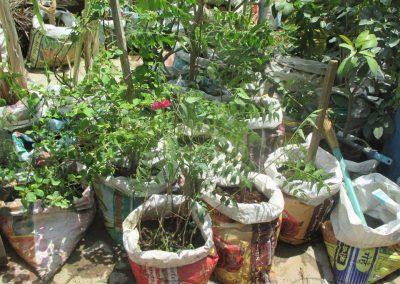 Faith Garden